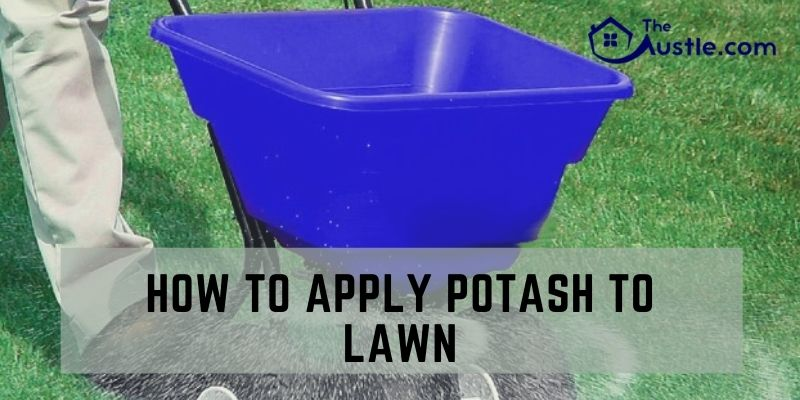 How To Apply Potash To Lawn