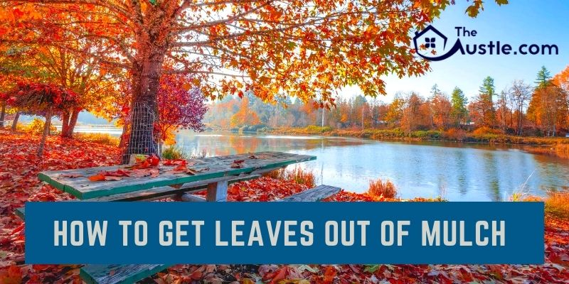 How To Get Leaves Out Of Mulch