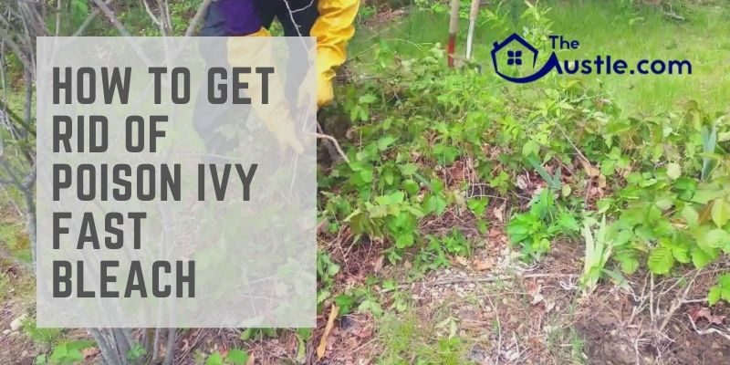 How to Get Rid of Poison Ivy Fast Bleach