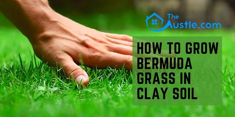 How To Grow Bermuda Grass In Clay Soil