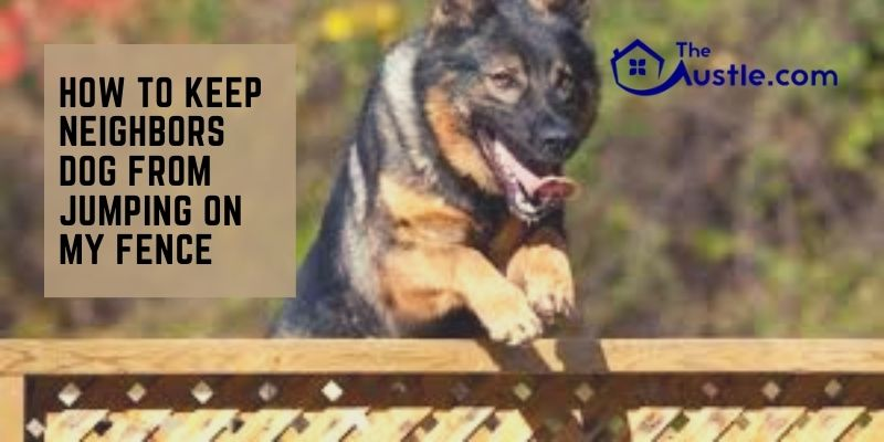 How to Keep Neighbors Dog from Jumping on My Fence