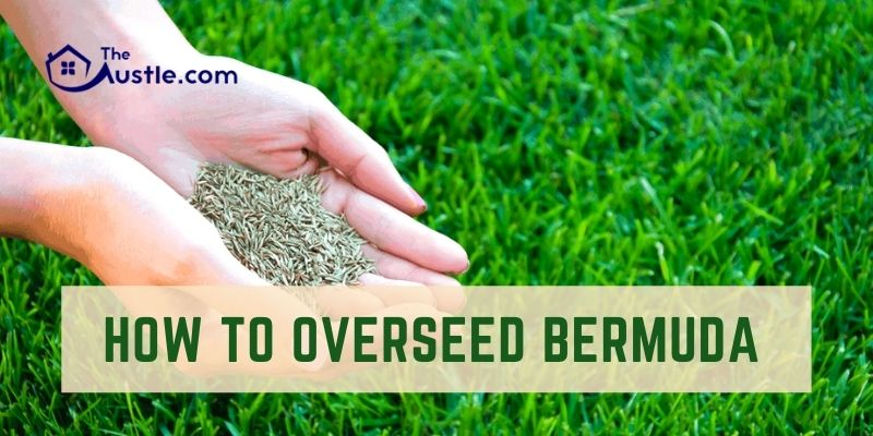 How To Overseed Bermuda