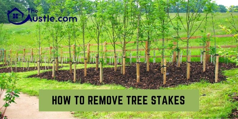 How To Remove Tree Stakes