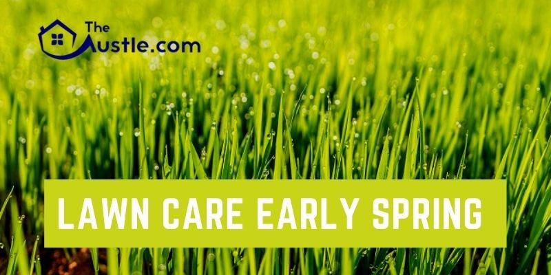 Lawn Care Early Spring