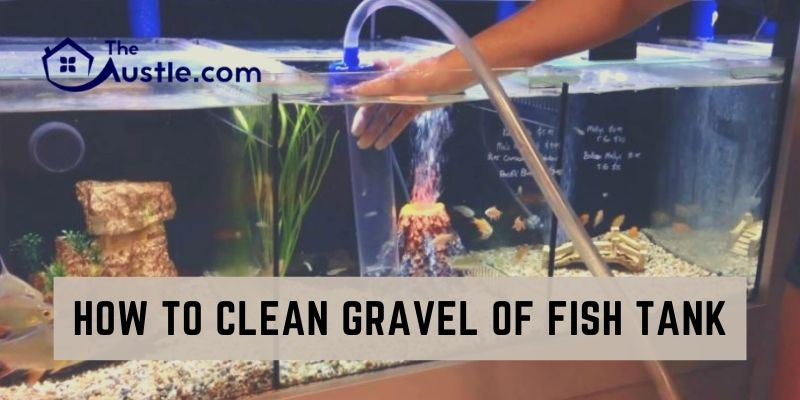 How to Clean Gravel of Fish Tank