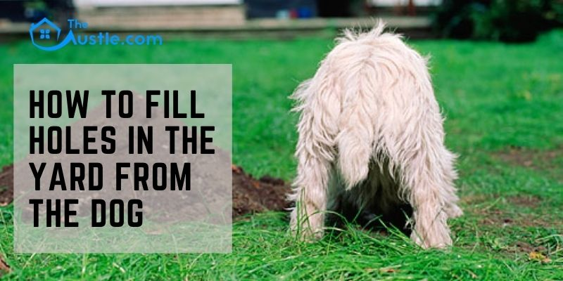 How To Fill Holes In The Yard From The Dog