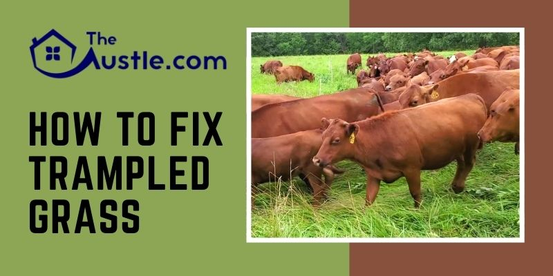 How To Fix Trampled Grass