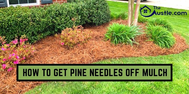 How To Get Pine Needles Off Mulch