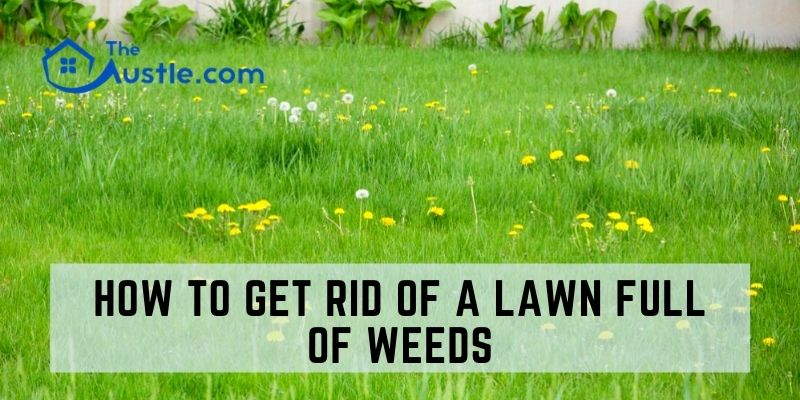 How to Get Rid of a Lawn Full of Weeds