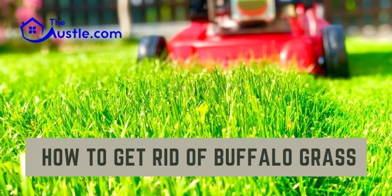How to Get Rid of Buffalo Grass