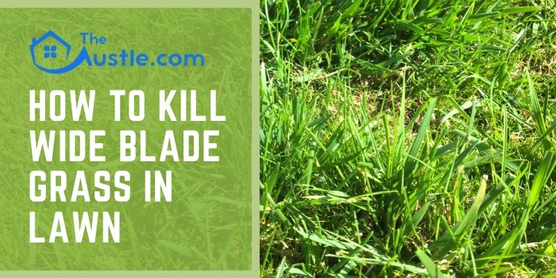 How To Kill Wide Blade Grass