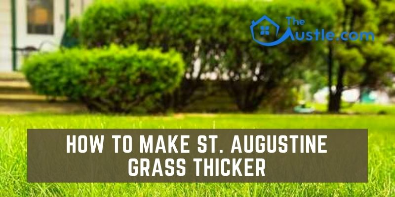 How to Make St. Augustine Grass Thicker
