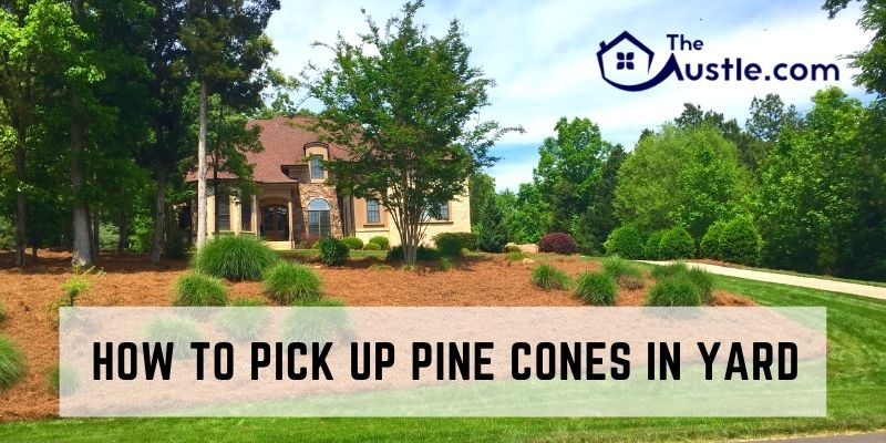 How To Pick Up Pine Cones In Yard