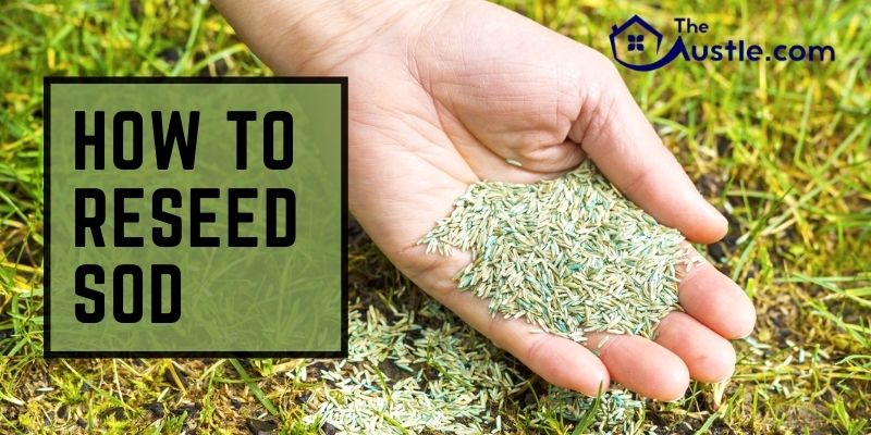 How To Reseed Sod