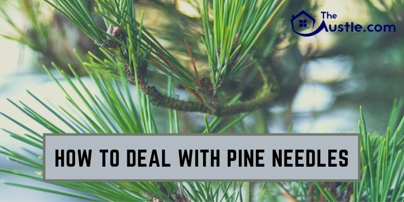 How to Deal With Pine Needles