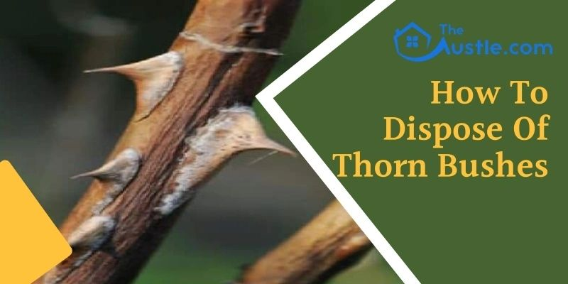 how to dispose of thorn bushes