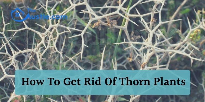 How To Get Rid Of Thorn Plants