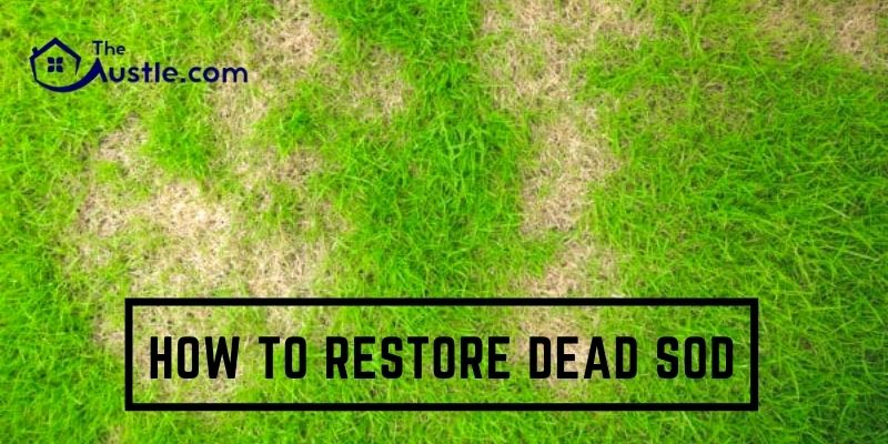 How To Restore Dead Sod