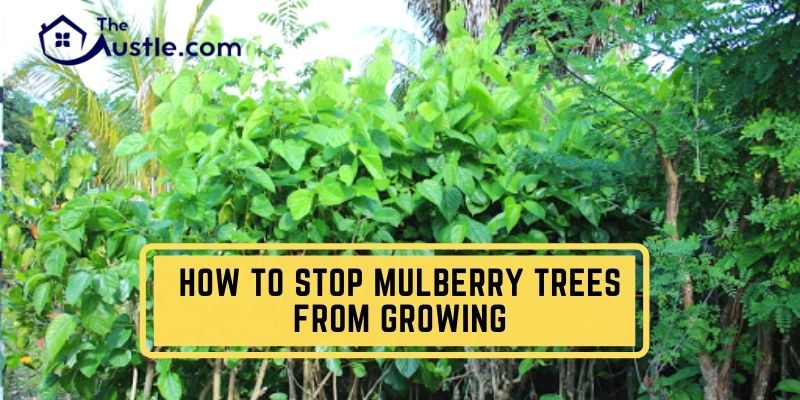 How To Stop Mulberry Trees From Growing