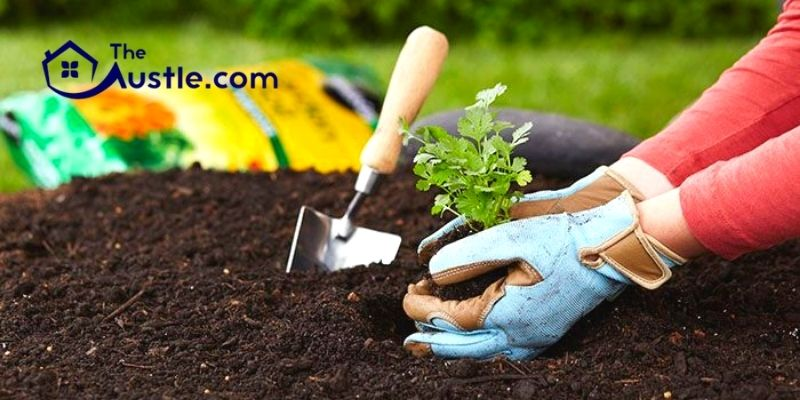 How To Select The Best Lawn Soil Conditioner